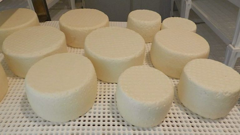 pecorino primosale 1 caseificio fontemozza